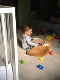 Adopte um animal. Não há melhor companhia para uma criança